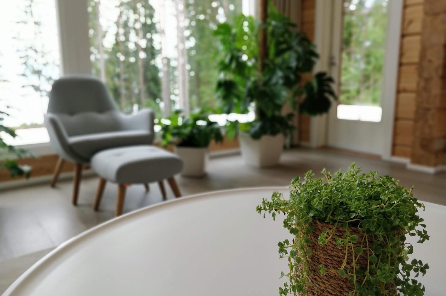 Valoisa sisätila, jossa viherkasveja ja harmaa nojatuoli