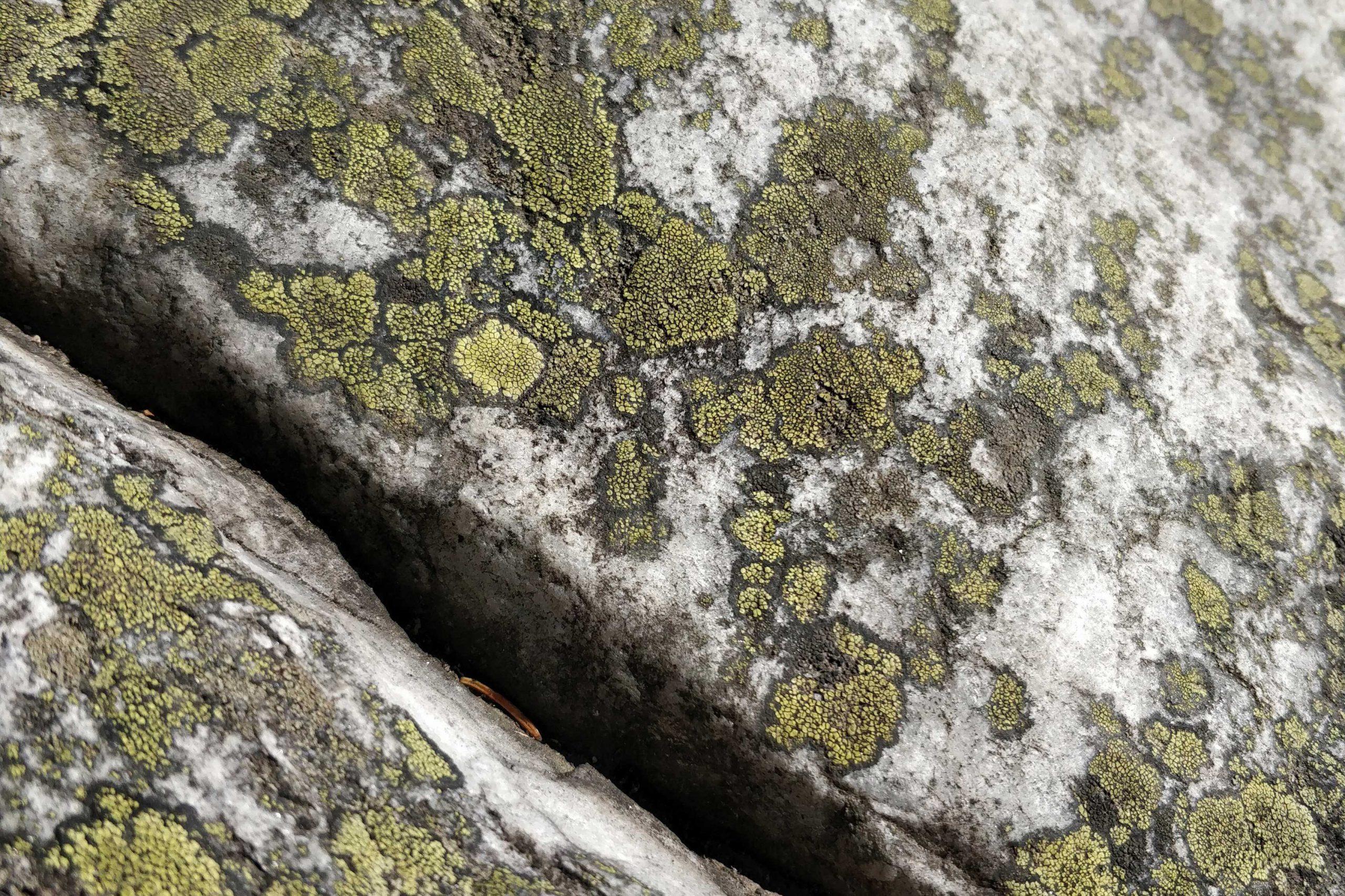 Lähikuva railosta sammaleisessa kivessä