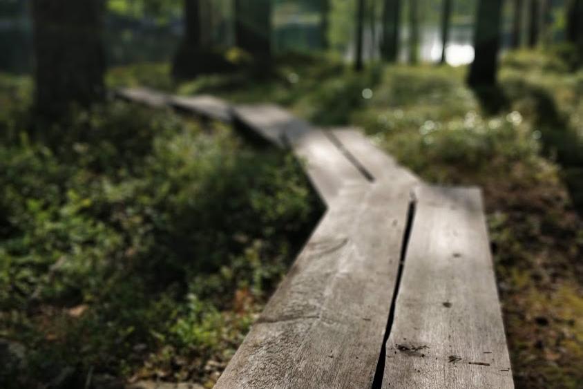 Pitkospuut aamuaurinkoisessa metsässä